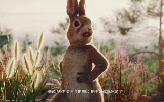 代写软文,华为最新动画广告