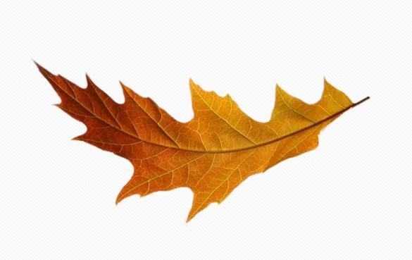 金黄色的树叶.jpg